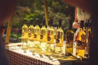 Ta nejlepší česká vína - Svátek vína na soutoku